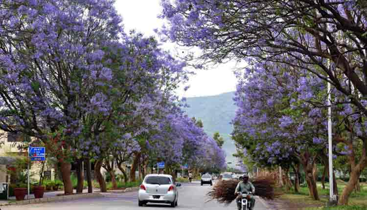 pollen ka darakht by abu yahya inzaar